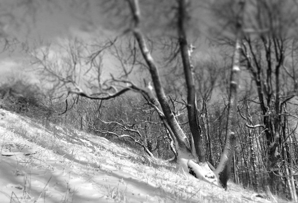 8. Téli erdő a Csóványos tövében.jpg