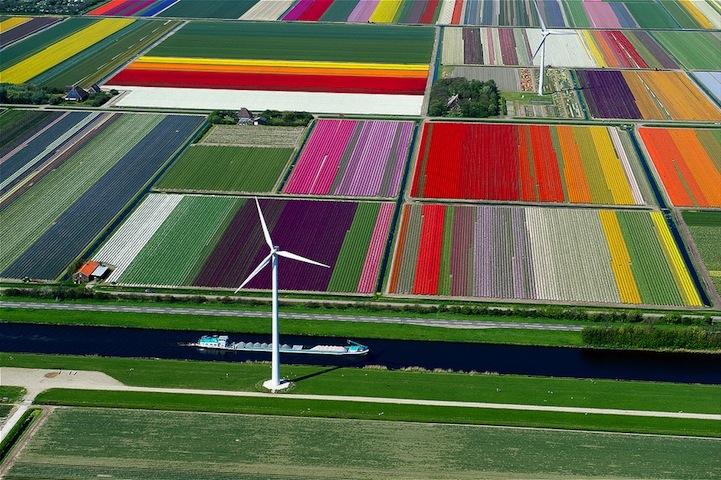 Tulipán mezők.jpeg