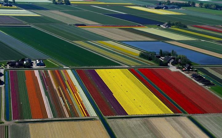 Tulipán mezők10.jpeg