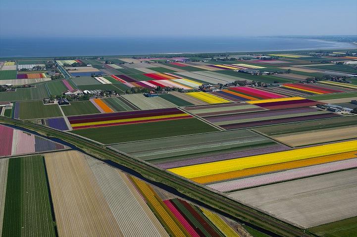 Tulipán mezők11.jpeg