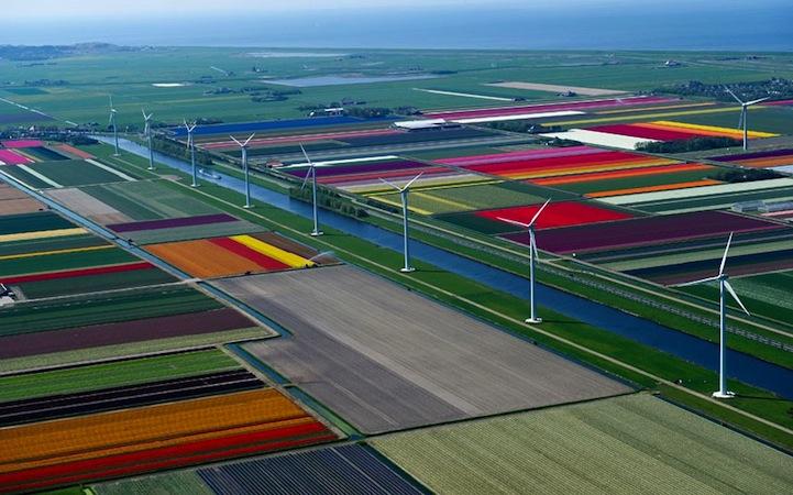 Tulipán mezők2.jpeg
