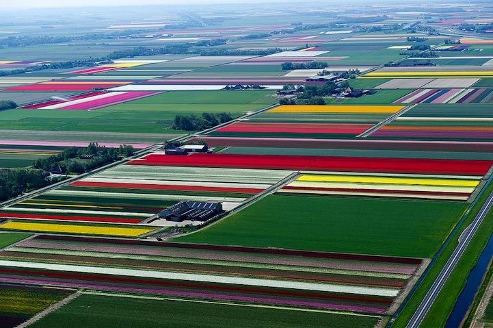 Tulipán mezők5.jpeg