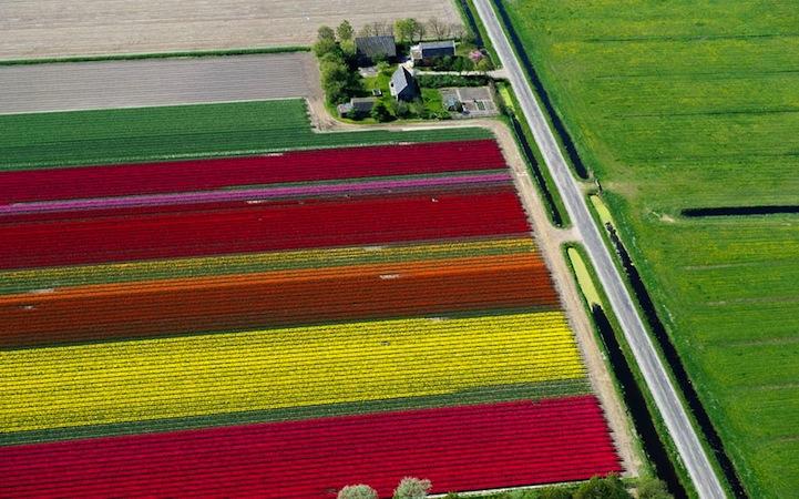 Tulipán mezők8.jpeg