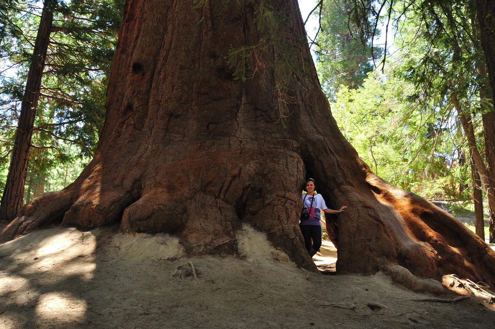 Giant Sequoia National Park2.JPG