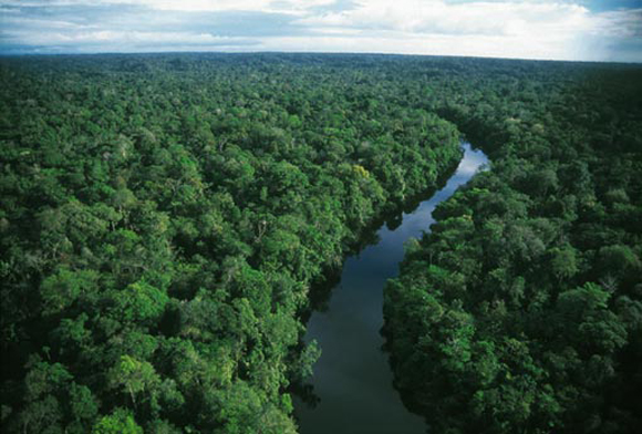 amazon_rainforest_esoerdo.jpg