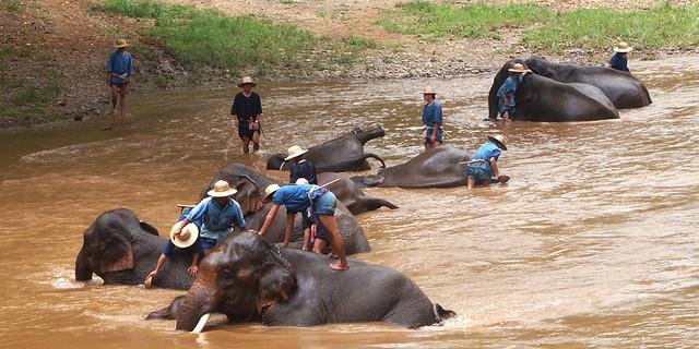 Chiang Rai_elefántfürdetés.jpg