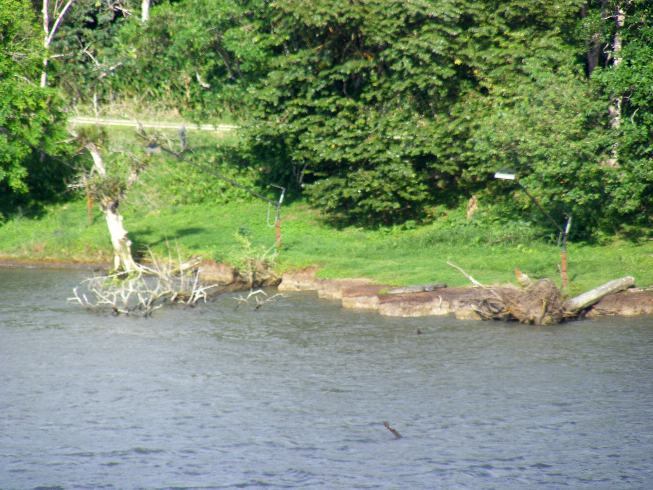 krokodil a parton.jpg