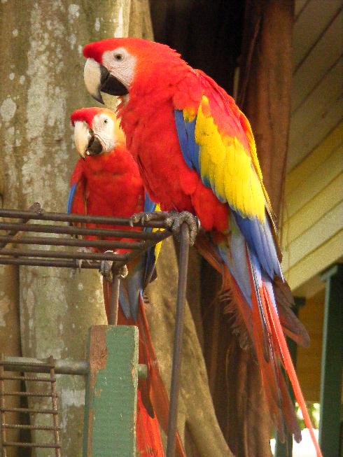 papagájok2.jpg