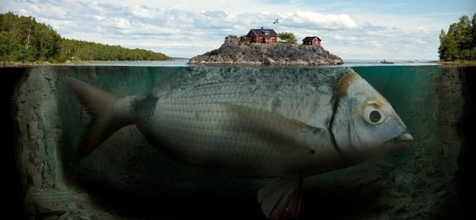Fishy island