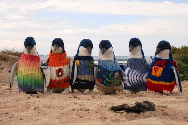 pingvinek_paradicsoma_1.jpg