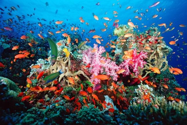 korall.jpg