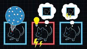 mousescare.jpg