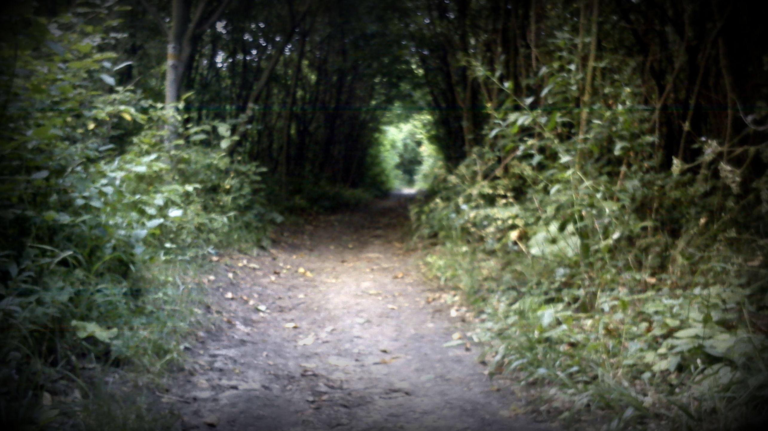 erdő.jpg