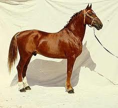frederiksborgi ló.jpg