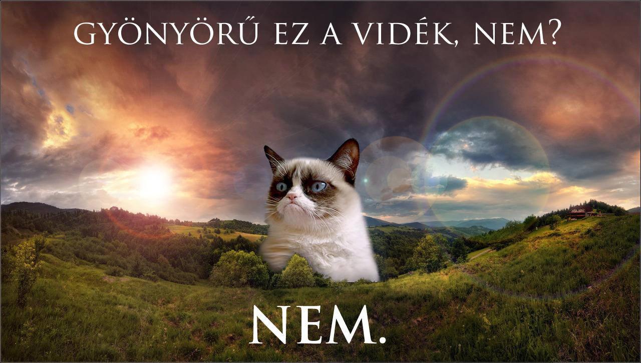 NEM copy.jpg