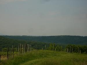 Szekszárdi szőlőhegyek_1.JPG
