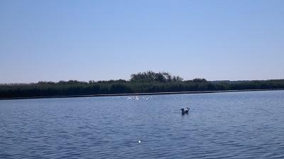 Tisza-tó_2 (10).jpg