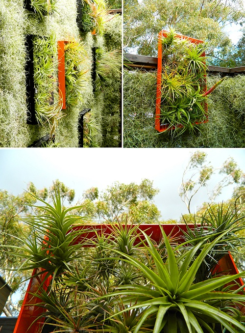 airplant_keretes.jpg