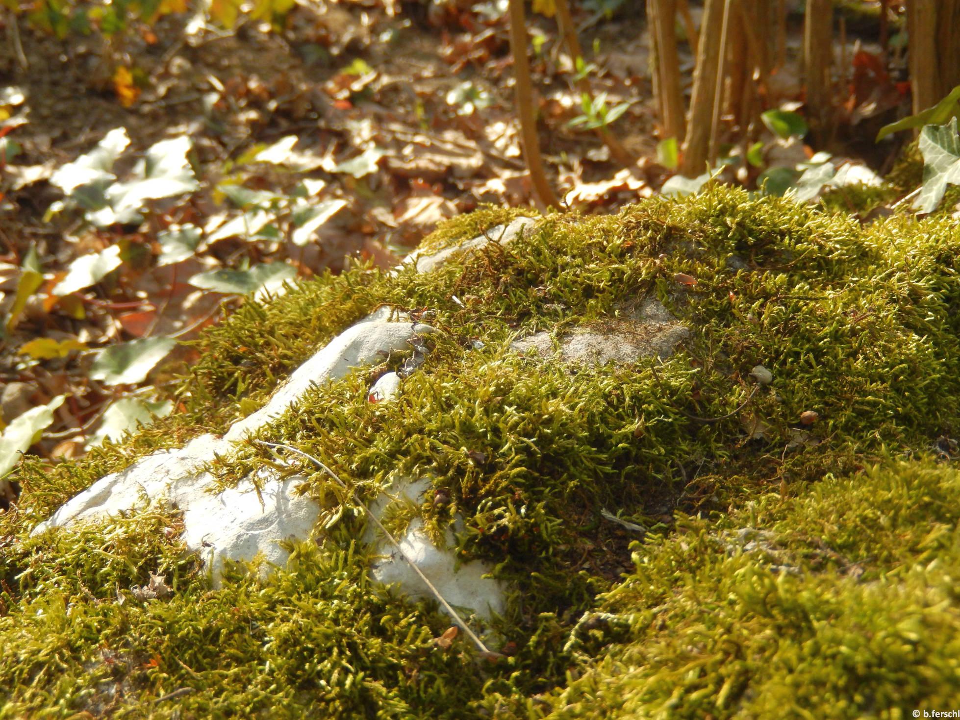 Mohos kő a fák árnyékában
