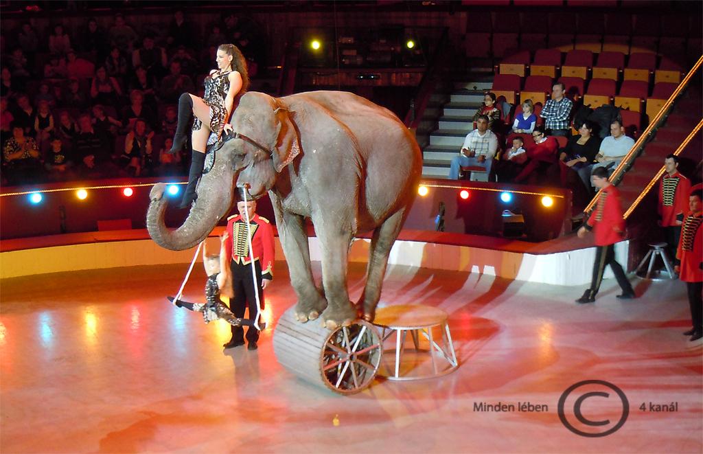 cirkusz_elefant.jpg
