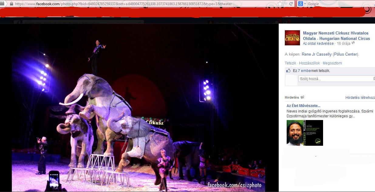 elefantok.jpg