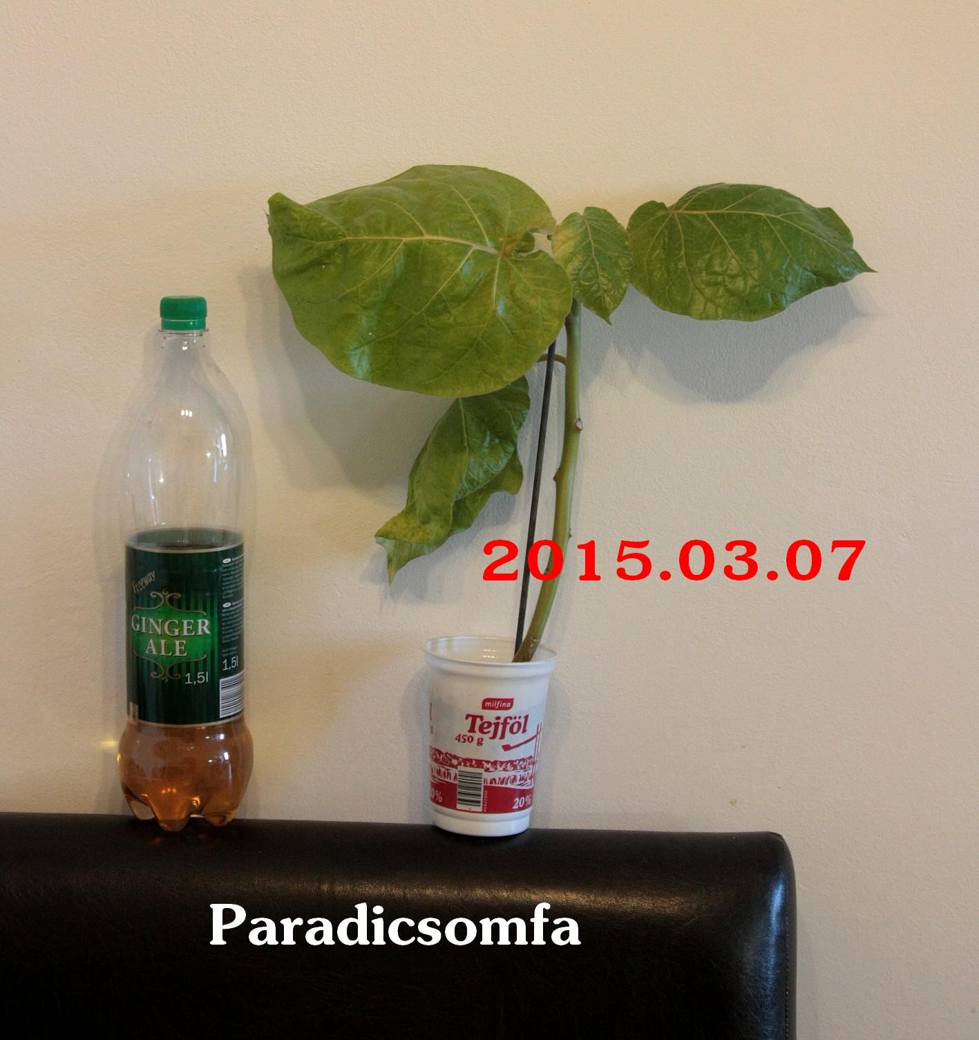 paradicsomfa1.jpg