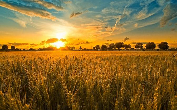 waiting-for-a-harvest.jpg