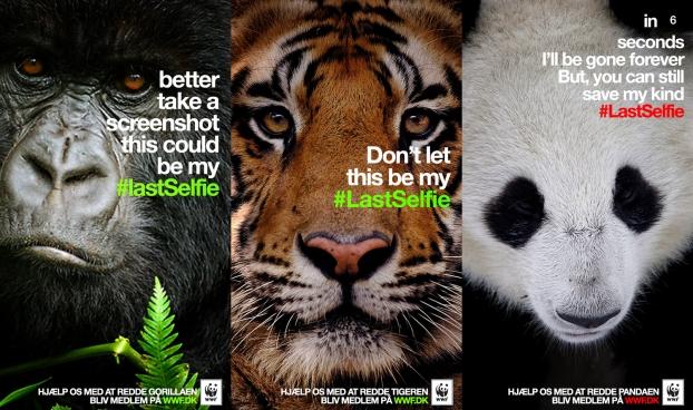 WWF_LastSelfie20140415040638.jpg