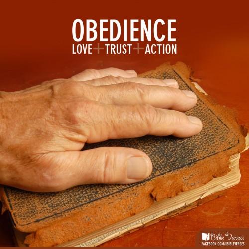 obedient-500x500.jpg
