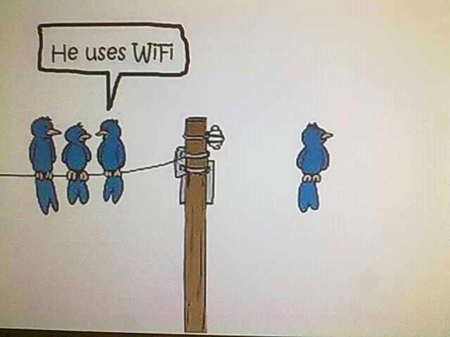 Wifis madár